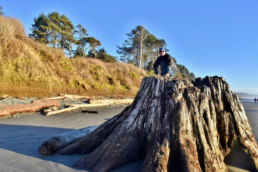 huge stump at Kalaloch beach 3
