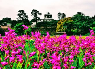Castle in Kanazawa, Japan with flowers around it