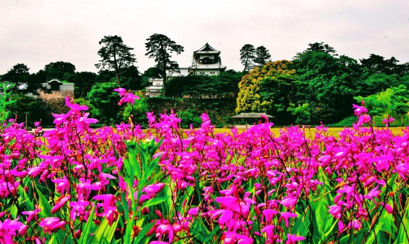 Castle in Kanazawa, Japan with flowers around it