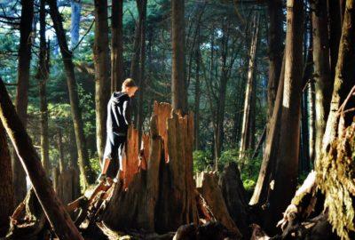 boy looking inside hollow tree