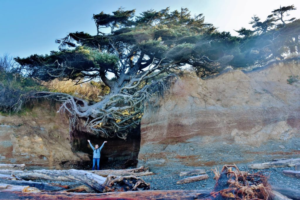 Tree of Life at Kalaloch Campground