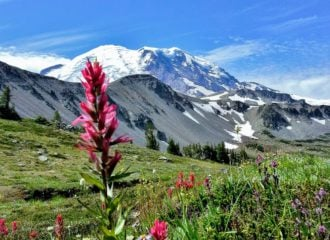 Mt Rainier with wildflowers at Sunrise Visitor Center