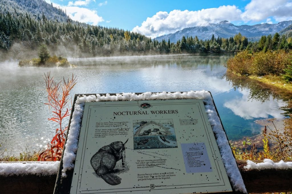 informative sign about beavers in Gold Creek Pond