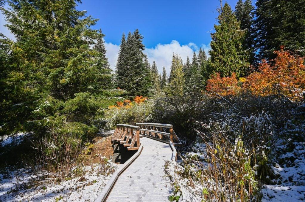 Snowy bridge over Gold Creek