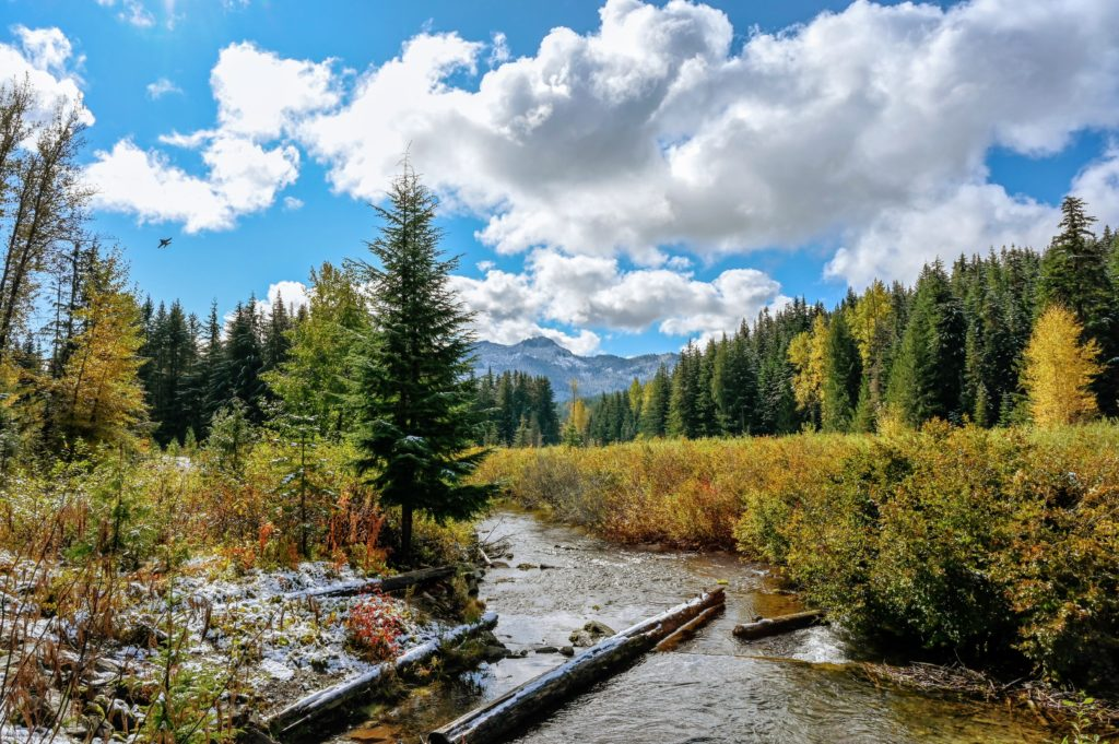 Gold Creek in the fall.