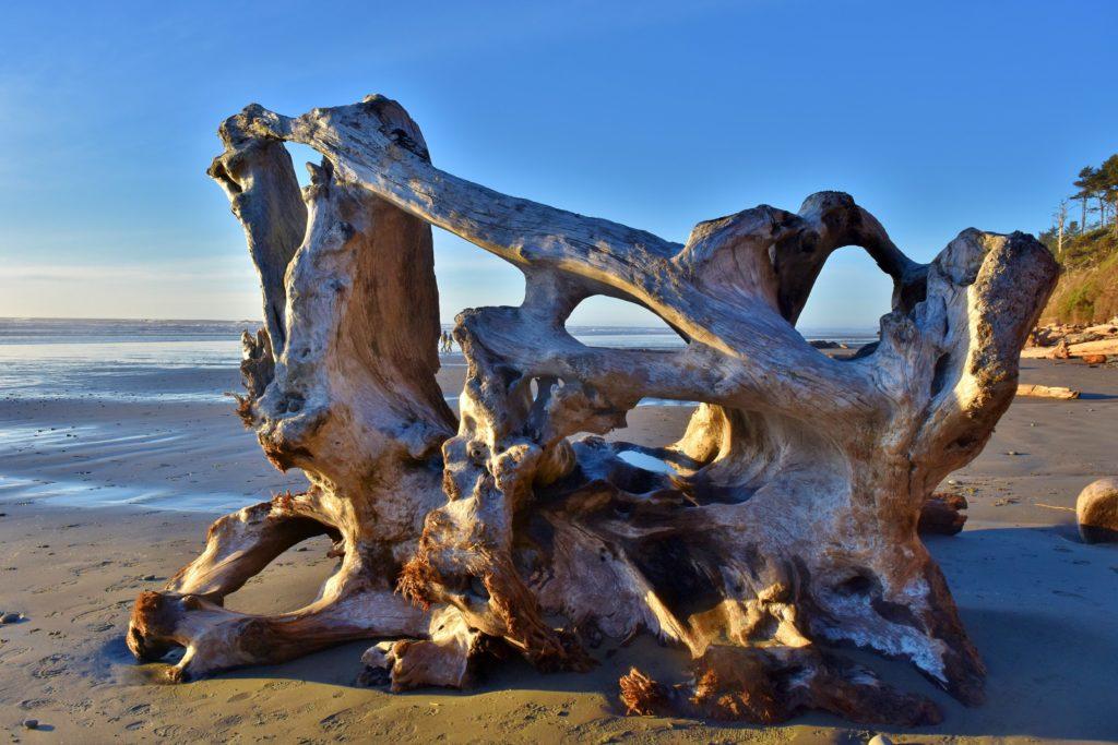 driftwood on the beach by Kalaloch