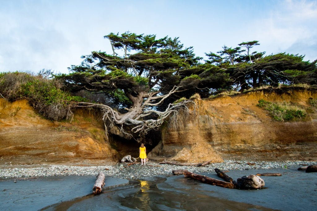 The tree of life at Kalaloch campground.