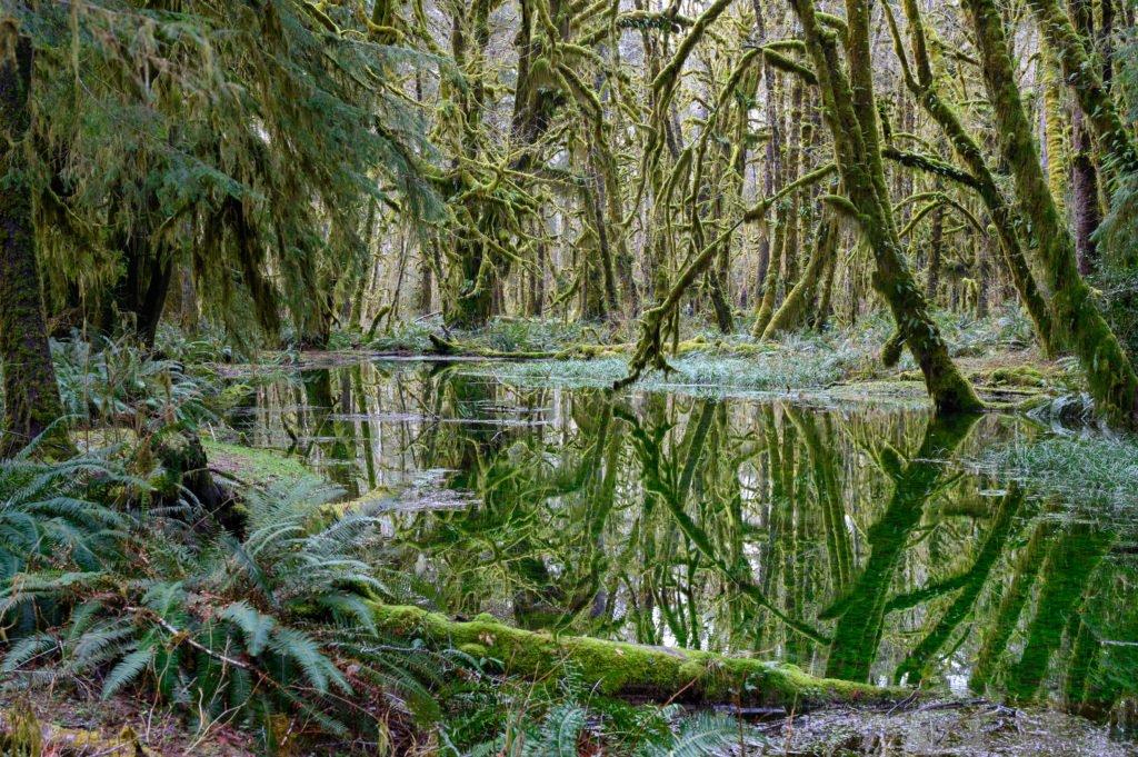 Maple Glade Rainforest trail