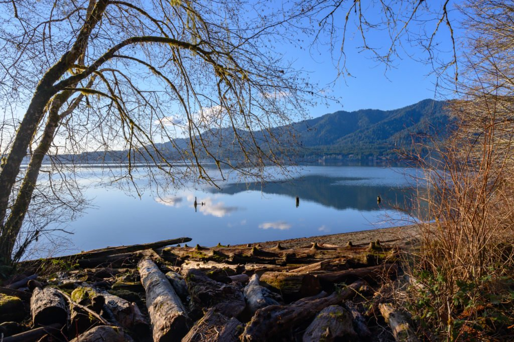 Lake Quinault with logs