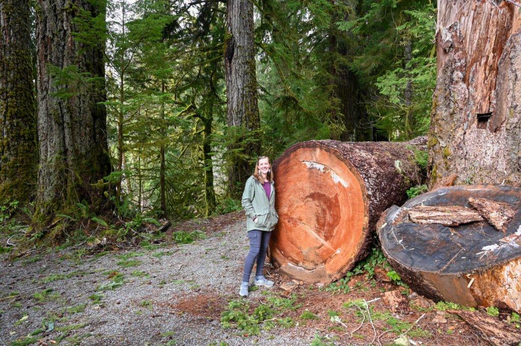 July creek trees Lake Quinault