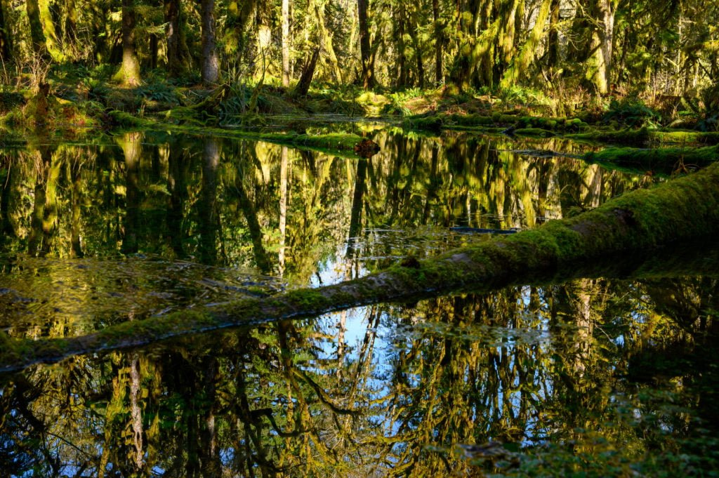 rainforest reflections in the water