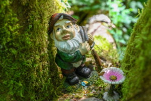 Gnome in a tree on gnome trail