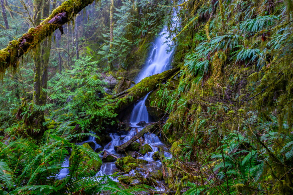 forested waterfalls