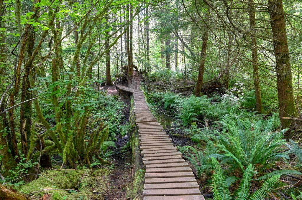footbridge on gnomes trail