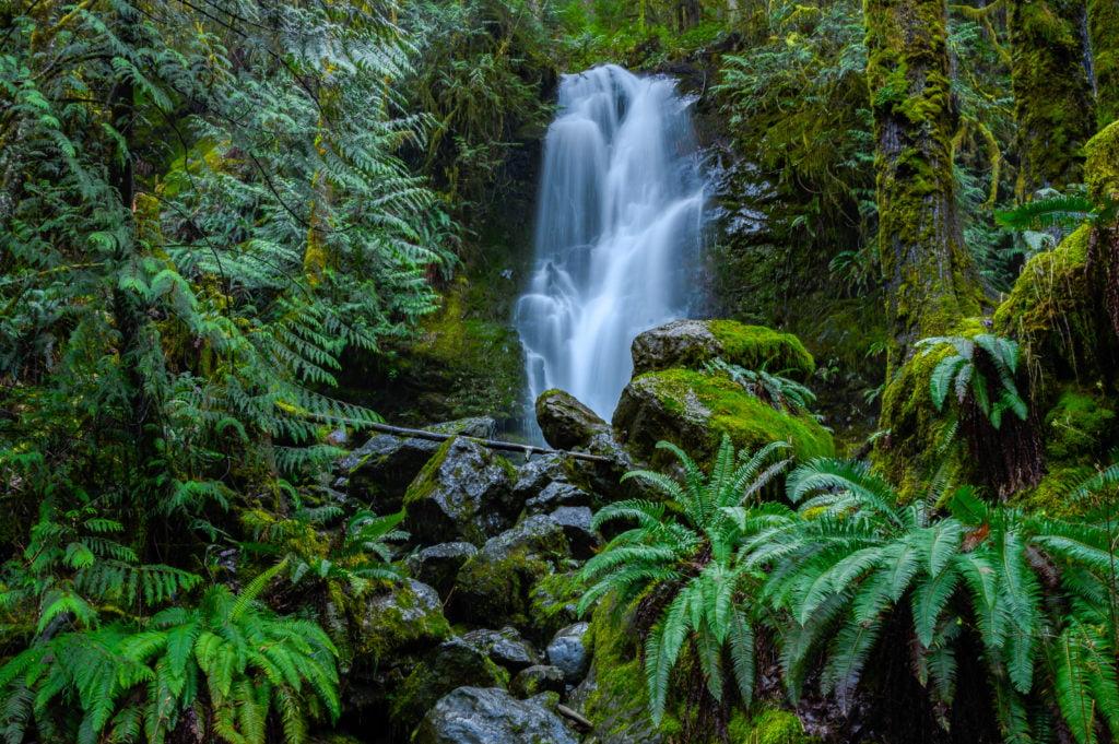 Merriman Waterfalls Lake Quinault