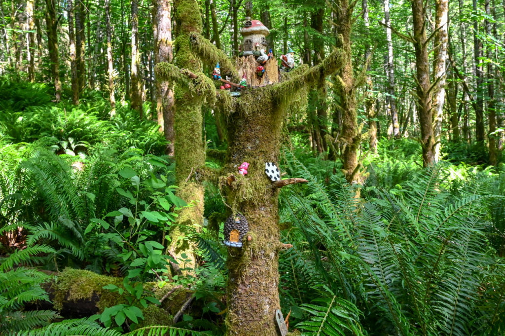 a mossy tree with gnomes on it