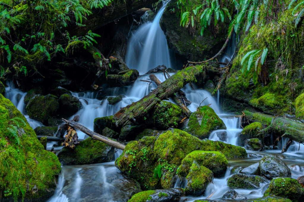 mossy scenery with waterfalls