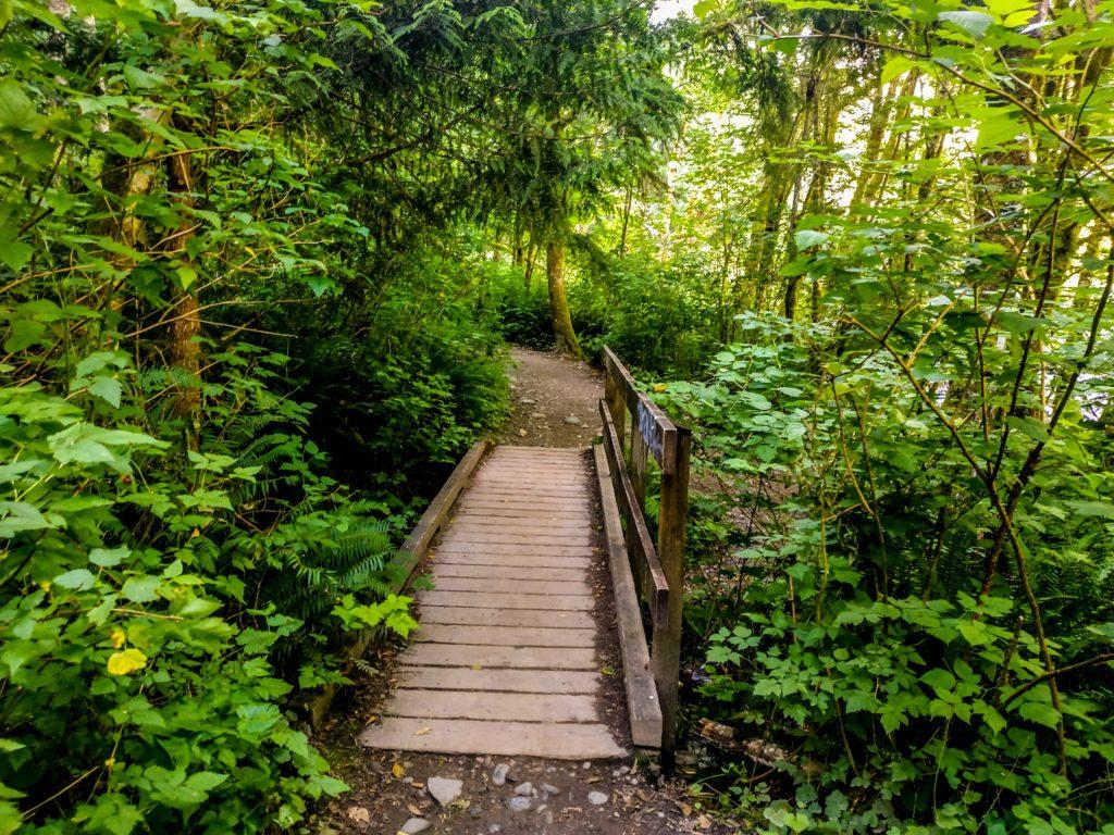 a little bridge along a forest trail