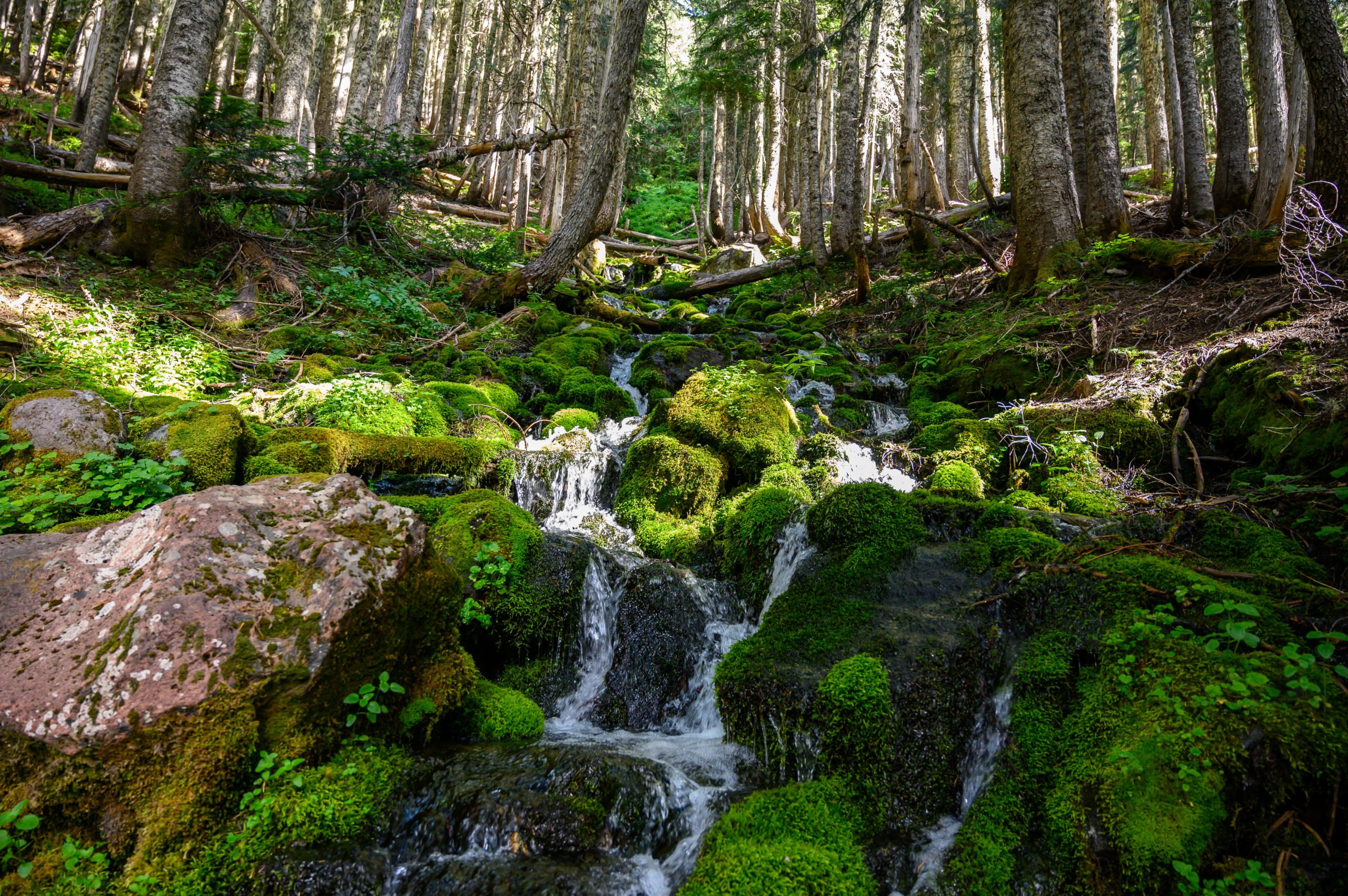 mossy rocks and cascading waterfalls at spray creek