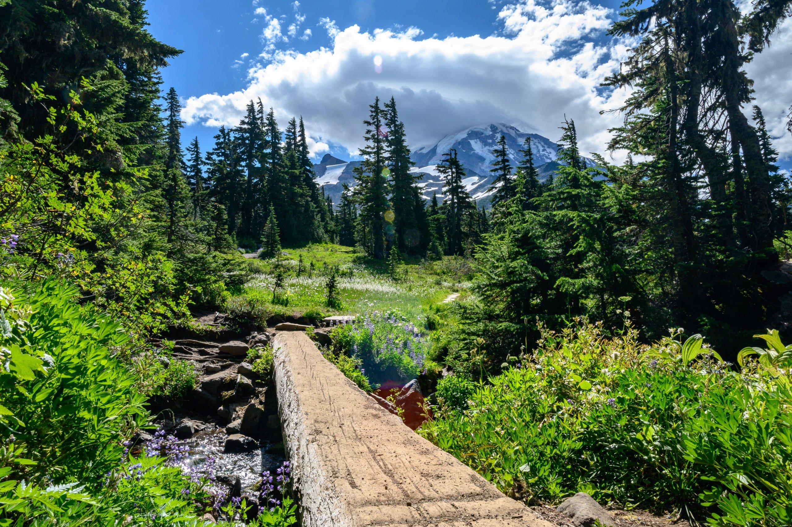 The entrance to Spray Park at Mt Rainier.