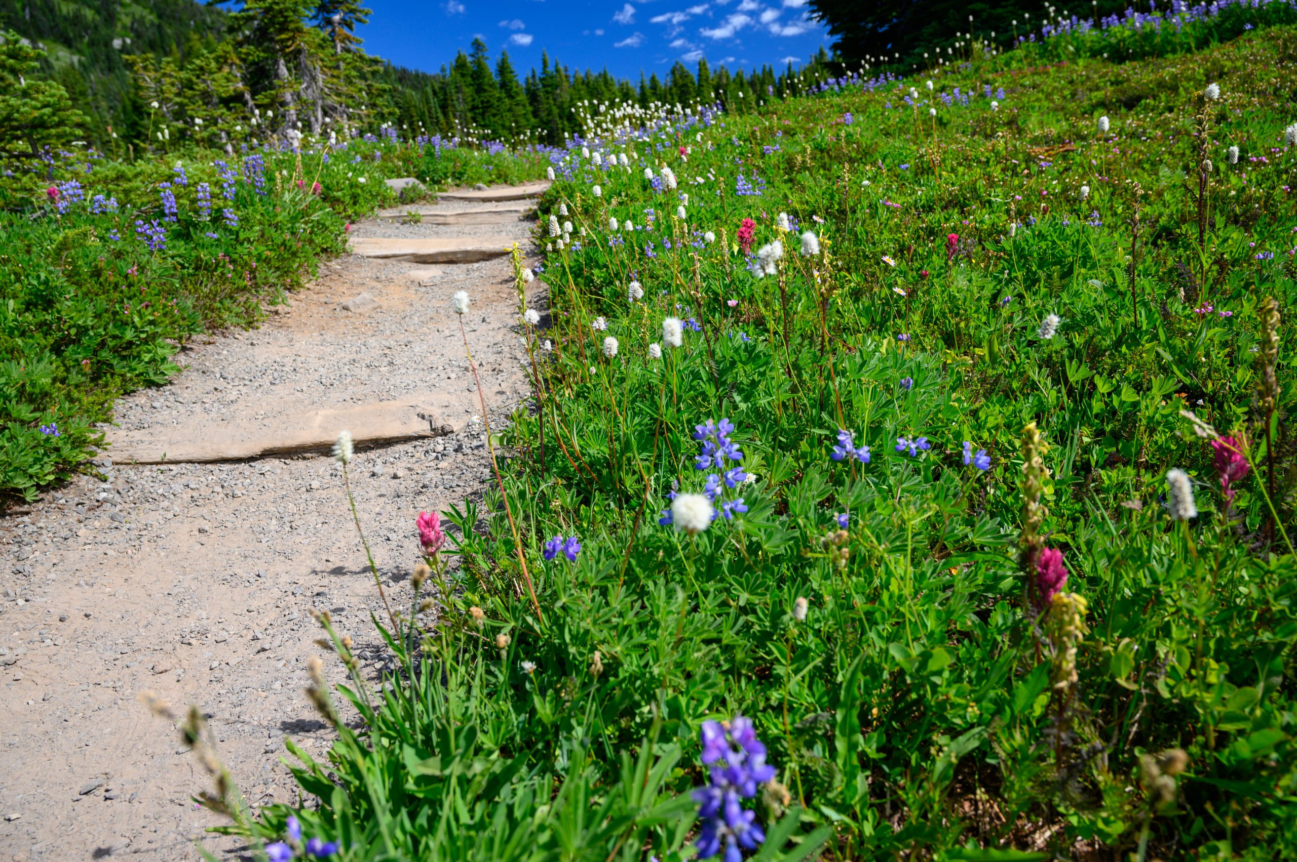Spray Park trail with wildflowers on each side.