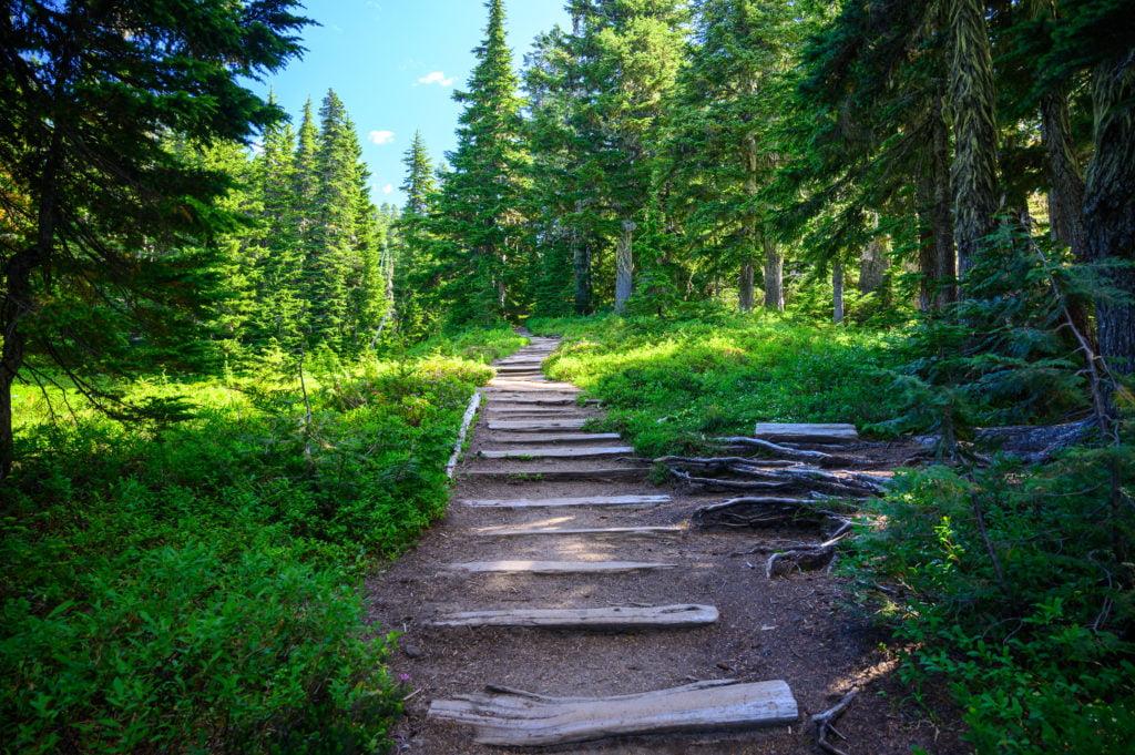 wooded trail spray park trail