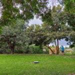 grassy lawn in Kula HI