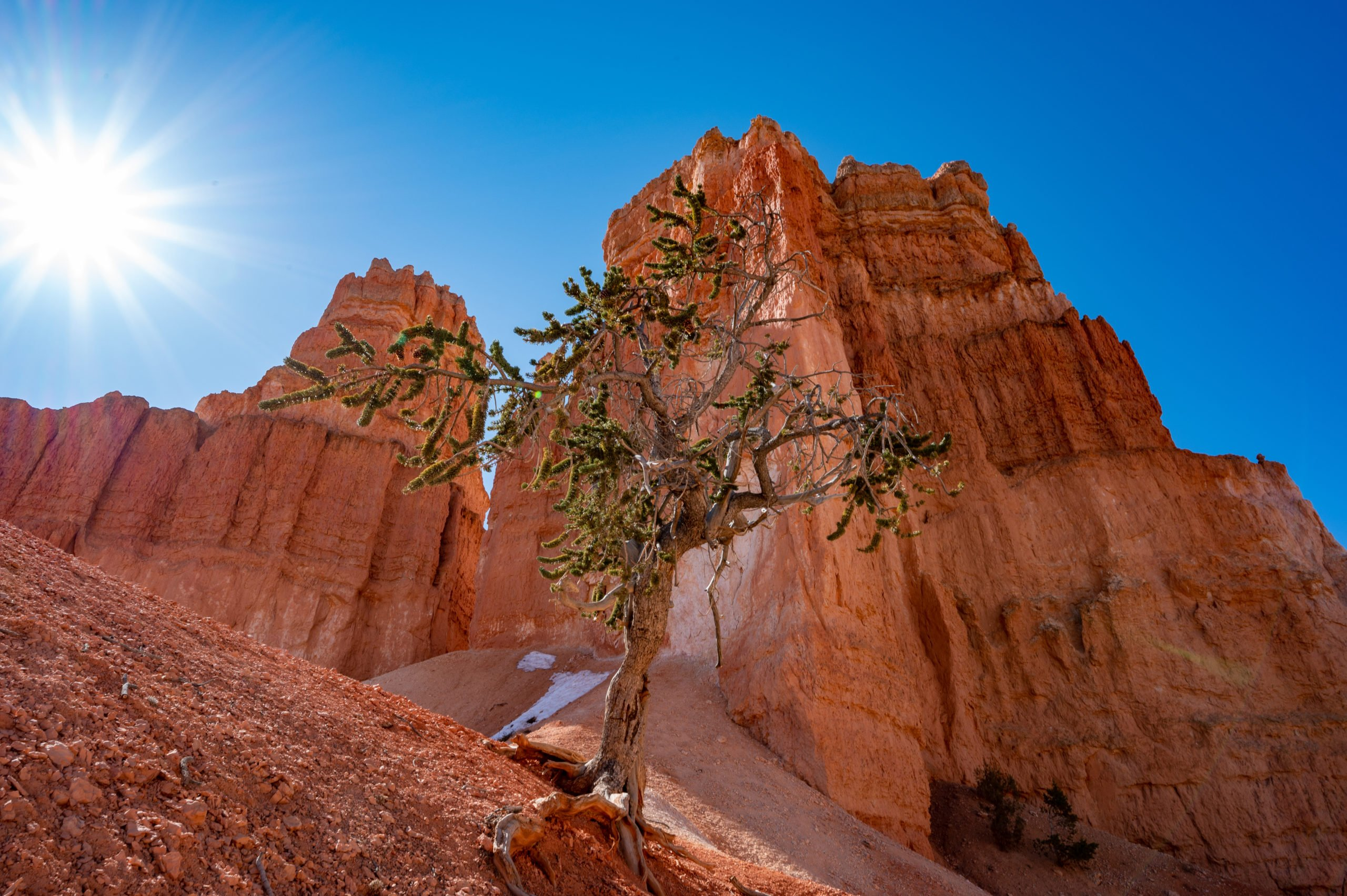 An interesting tree in Bryce Canyon.