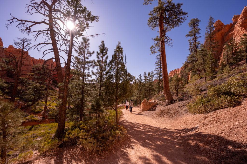 Navajo Loop Trail Opens into Trees