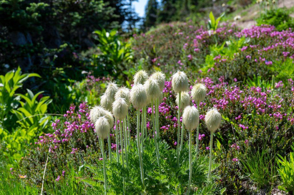 Unique wildflowers