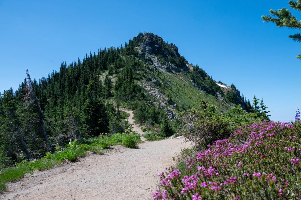 Dege Peak and wildflowers
