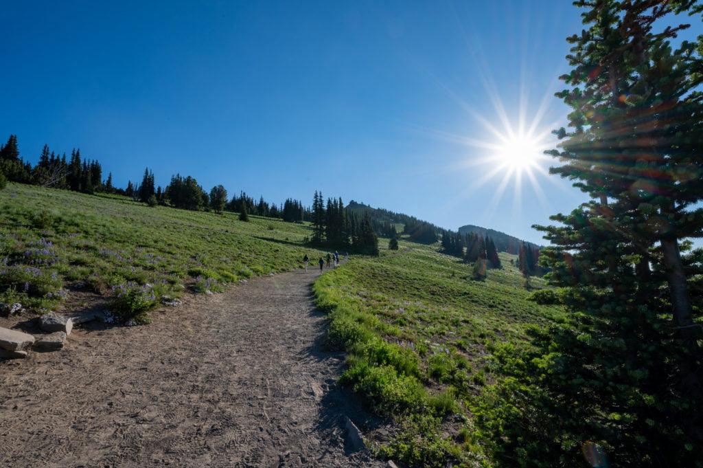 trail above Sunrise at Rainier